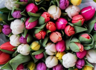 פרחים בשלל צבעים